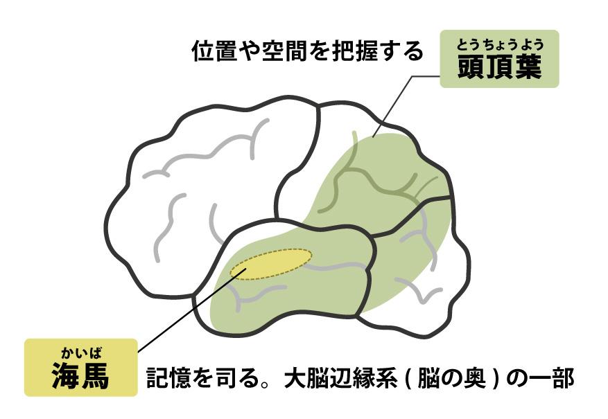 症 アルツハイマー 型 と は 認知
